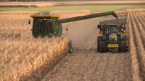 corn harvest elevated row Footage