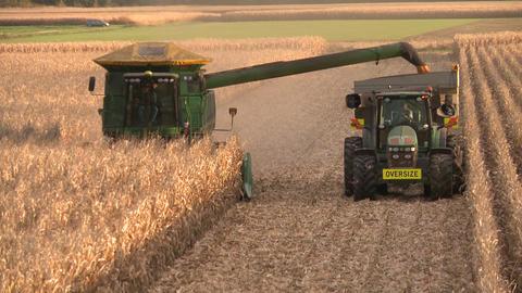 corn harvest elevated row Stock Video Footage
