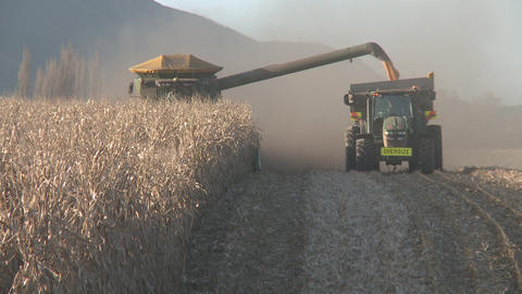 corn harvest long rows Stock Video Footage
