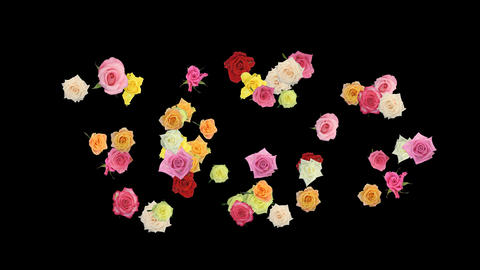 Montage of opening rotating roses year 2012 shape 1 Stock Video Footage