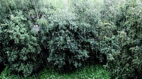 rainfall Stock Video Footage