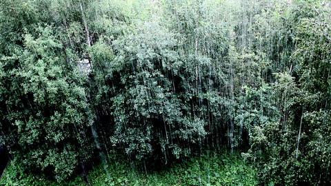 rainfall Footage