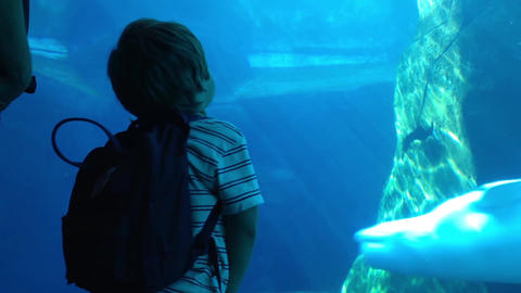 Silhouette Of Child Watching Beluga At The Vancouv stock footage