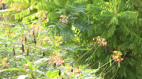 Butterfly In Green Forest stock footage