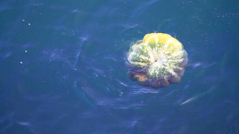 Floating Pumpkin, Polluted Sea Surface stock footage