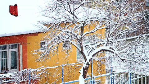 Snow covered house and gentle snow falling on tree Footage
