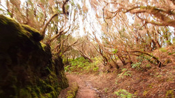 Anaga Forest on Tenerife, Canary Islands Footage