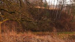 Polish Rural Landscape Footage