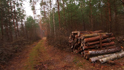 Wooden Log Stacks along the Forest Road for Forest Footage
