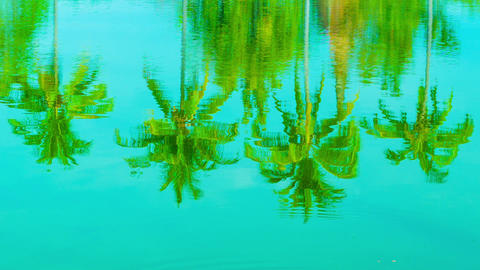 Coconut palms reflection in a pond Footage