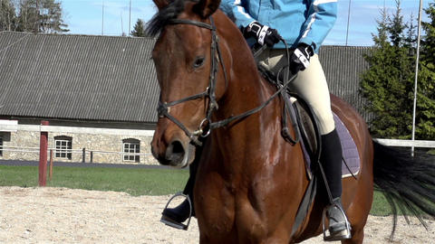 An equestrian riding a brown horse Footage