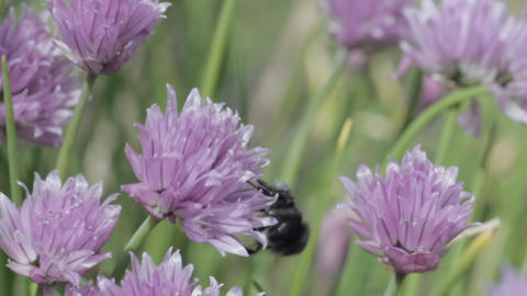 Bees Montage Stock Video Footage
