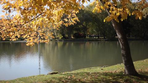 Autumn tree Stock Video Footage