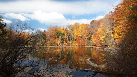 Autumn trees Stock Video Footage