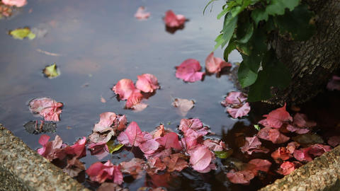 Floating Petals Stock Video Footage