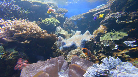 Aquarium Stock Video Footage