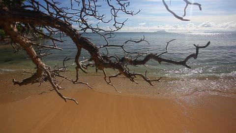 Hawaiian Beach Footage