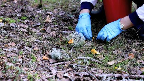 mushrooms Stock Video Footage