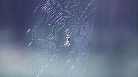 spider Footage