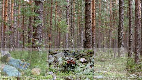 mushrooms montage Stock Video Footage
