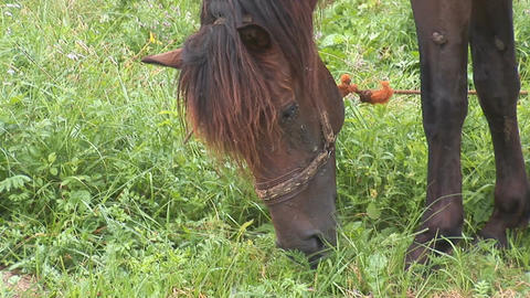 horse 4 Stock Video Footage