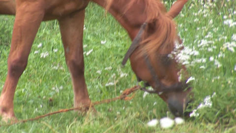 horse 14 Stock Video Footage