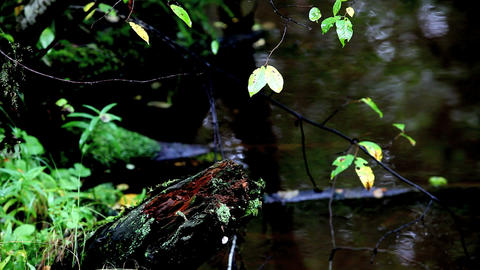 tropical brook Stock Video Footage