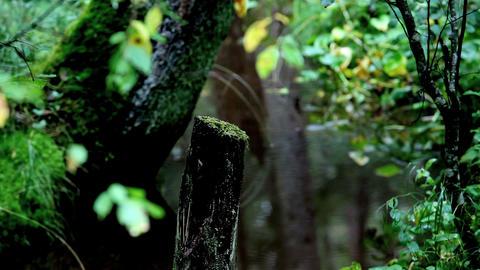 wetland Stock Video Footage