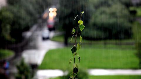 rain Stock Video Footage