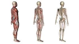 human body Animation
