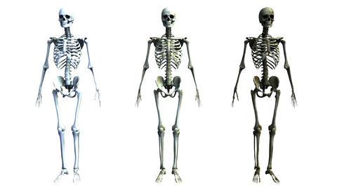 skeleton Stock Video Footage