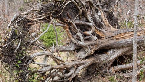 Tree stock footage