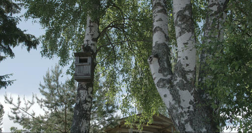 Trees around the small house in Kasmu Estonia FS70 Footage