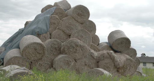 The Rolls Of Hay Balls In The Field FS700 4K RAW O stock footage