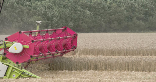 A wheat harvester harvesting crops on the field Footage