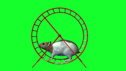 hamster Stock Video Footage
