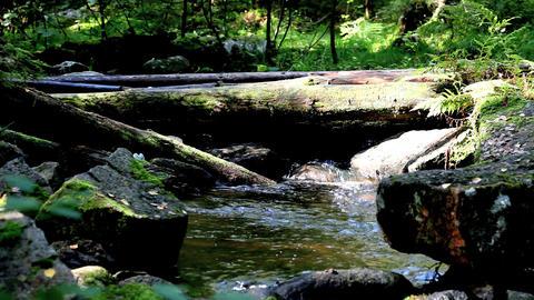 timber bridge Stock Video Footage