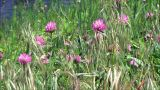 Wild Flowers In Wind stock footage