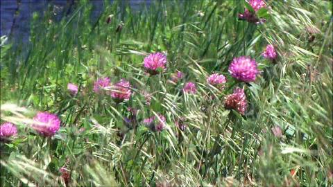 wild flowers in wind Footage