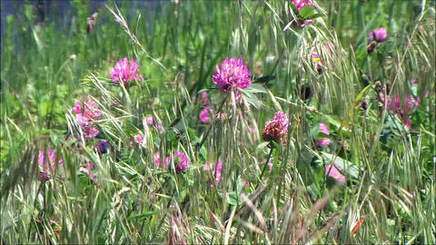 wild flowers in wind Stock Video Footage