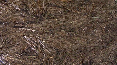 cane texture 01 Stock Video Footage