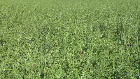field grass texture 01 Footage