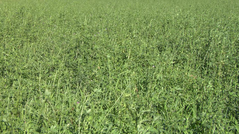 field grass texture 01 Stock Video Footage