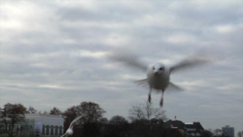 feed seagulls by hand slowmo Stock Video Footage