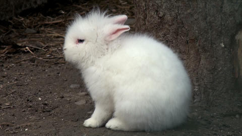 adorable baby rabbit Stock Video Footage