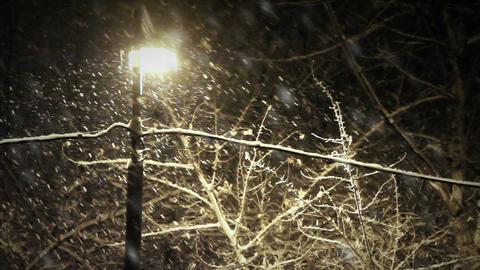 Night snowfall Stock Video Footage