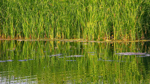 water ripple on summer pond Stock Video Footage