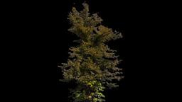 tree 12 Footage