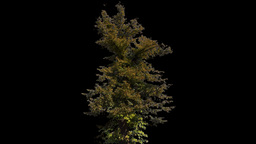 tree 12 Stock Video Footage