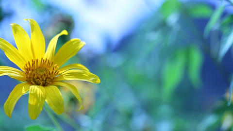 Flower in nature Footage